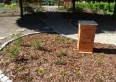 pszczoły 003