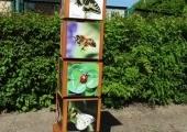 pszczoły 006