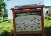 pszczoły 012