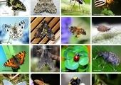 swiatowid owady (Copy)